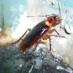 Kakerlaken-Radio - laut.fm